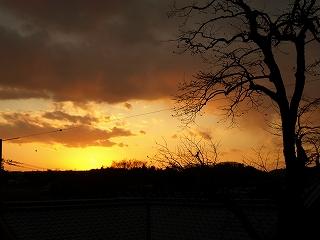 樹木と黄昏