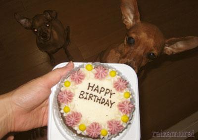 ケーキ♪ケーキ♪ケーキ♪♪