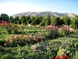iran2010-6-45.jpg