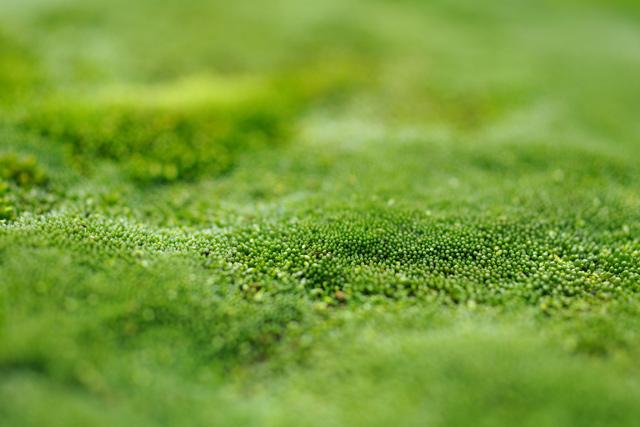 greengreen1.jpg