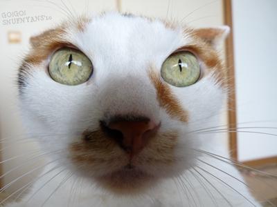 この猫さんの