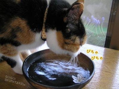 お水飲んでるし・・・