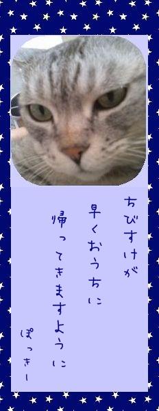七夕祭り 2010 01 ぽっきーさんのお願い事