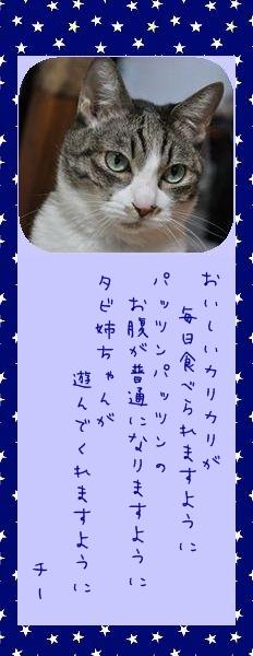 七夕祭り 2010 03 チーさんのお願い事