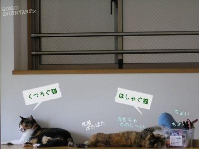 くつろぐ猫はしゃぐ猫