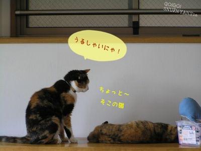 ちょっと~ そこの猫