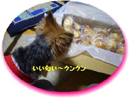 2009.2.6-2.jpg