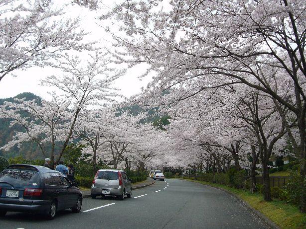 sasayama2.jpg