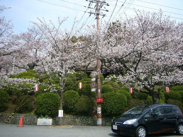 satukiyama8.jpg
