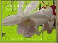 りん母2009.2.13