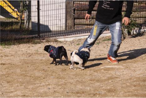 dog-space12.jpg