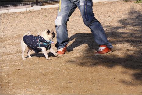 dog-space13.jpg