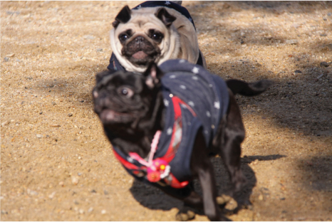 dog-space14-1.jpg