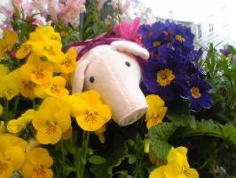 花に囲まれた小パム