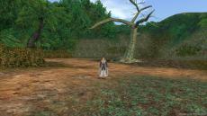 アマゾン 巨木1