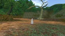 アマゾン 巨木2