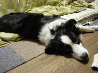 026_20100301220612.jpg