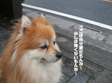 DSCF4676.jpg