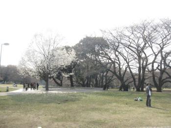 IMG_9459-201103.jpg