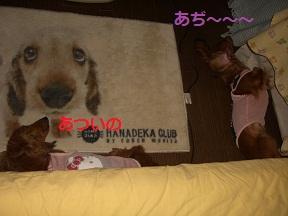 CIMG0004_20100719172236.jpg