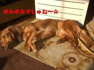 CIMG0009_20100320080709.jpg