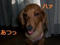 CIMG0037_20100727211348.jpg
