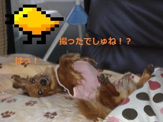 CIMG0040_20100727211509.jpg