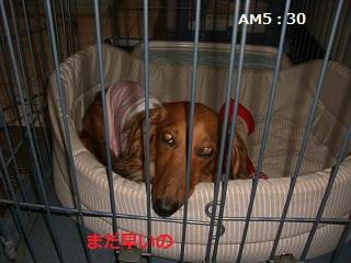 CIMG0041_20100726162108.jpg