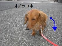 CIMG0045_20100726163007.jpg