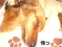 CIMG0060_20100727211736.jpg