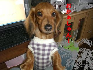 CIMG0061_20100324211806.jpg