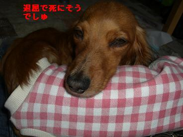 CIMG0065_20100324212434.jpg
