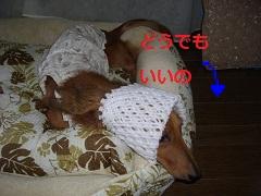 CIMG0076_20100804161423.jpg
