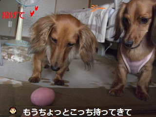 CIMG0103.jpg