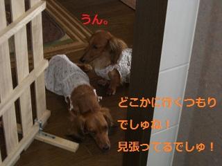 CIMG0128_20100818200629.jpg