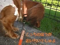 CIMG0136_20100818201417.jpg