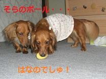 CIMG0143_20100818203043.jpg