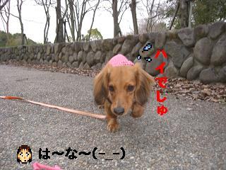 CIMG0157_20100329184759.jpg