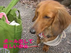 CIMG0158_20100329184853.jpg