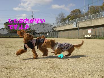 CIMG0187_20100331185841.jpg