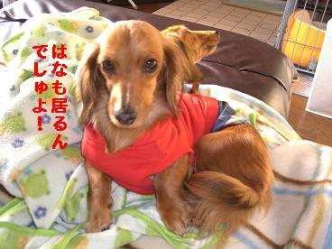 CIMG0211_20100403071946.jpg