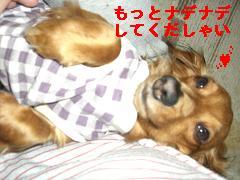 CIMG0282_20100405135730.jpg
