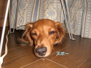 CIMG0306_20100901205433.jpg
