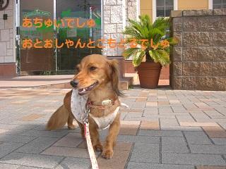 CIMG0309_20100903223657.jpg