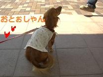 CIMG0315_20100903224946.jpg