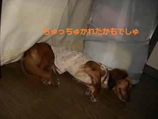 CIMG0319_20100901214456.jpg