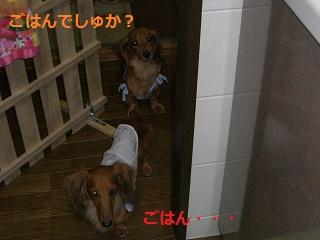 CIMG0334_20100903221953.jpg