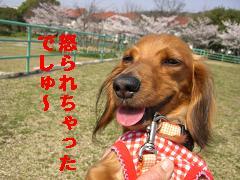 CIMG0343_20100406212945.jpg