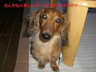 CIMG0345_20100909213252.jpg