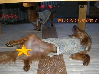 CIMG0351_20100909220740.jpg